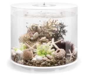 oase biorb tube aquarium