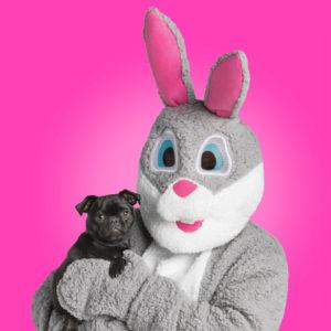 easter bunny petsmart